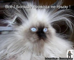взъерошеный кот